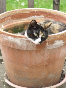 Potted Kitty