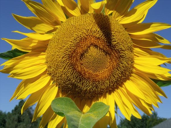 August Sunshine