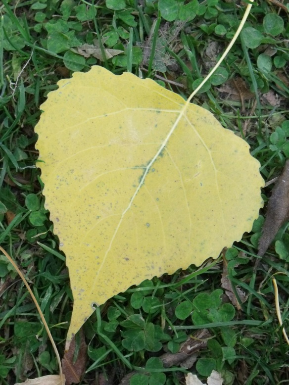 Cottonwood Heart