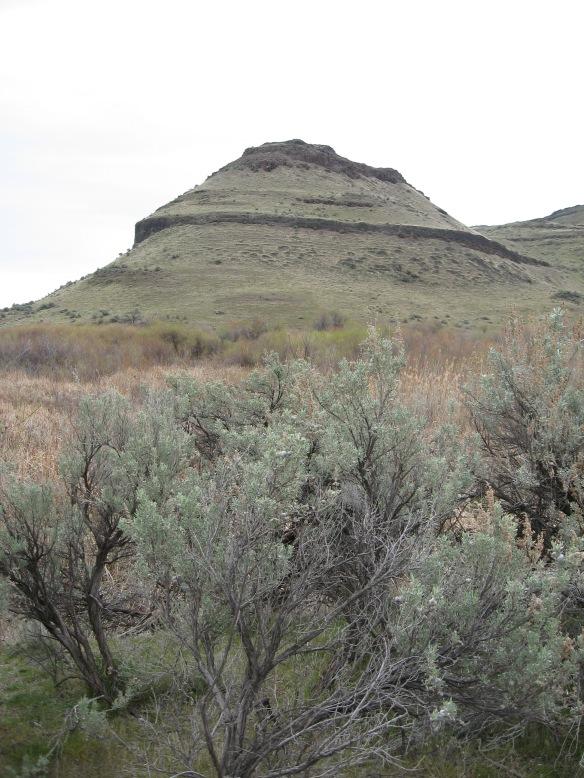Sagebrush Bluegrass Steppe