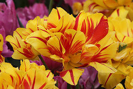 The Light Collective: On Self-Acceptance Skagit-tulips