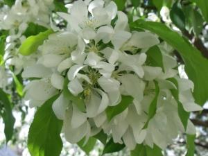 """""""April Blooms"""""""