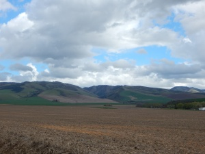 """Wheat fields and Cottonwood Canyon outside of Walla Walla, WA"""