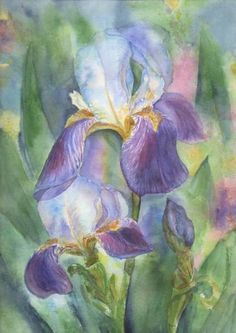 Art - Irises Painting by Victoria Shaad