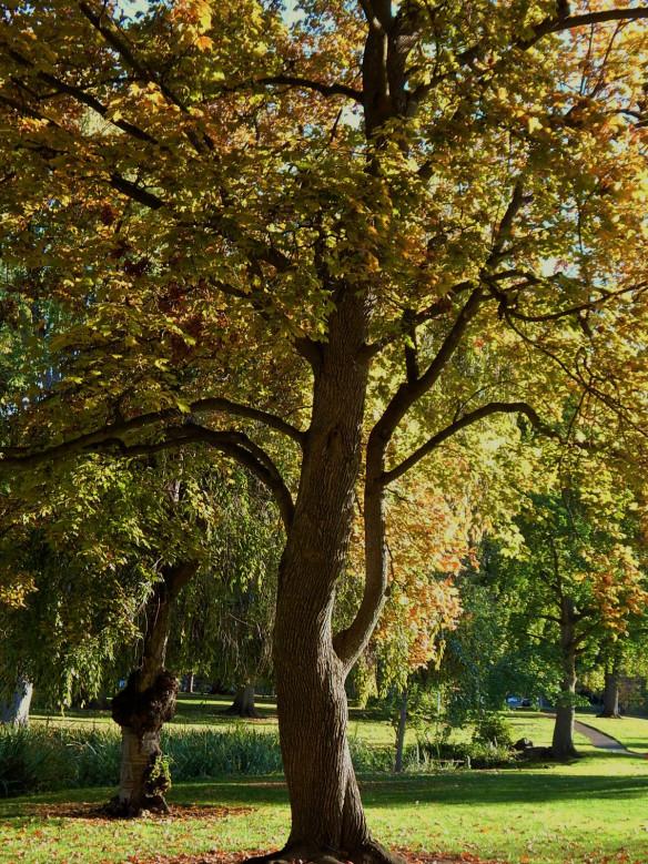 Elegant Tree