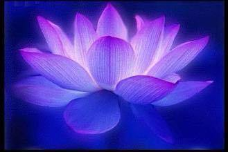 violet-blue-lotus