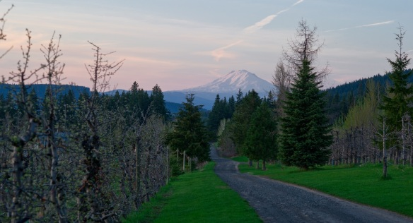 Peter's Mt Adams