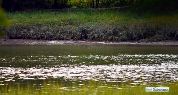 York River New Moon 9.9.18.JPG