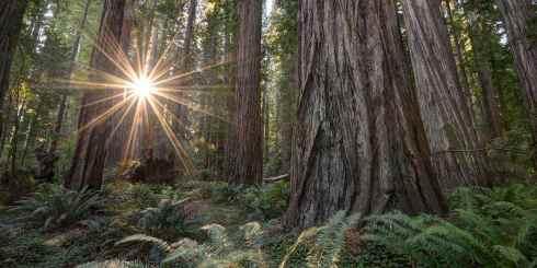 californiasredwoodcoast